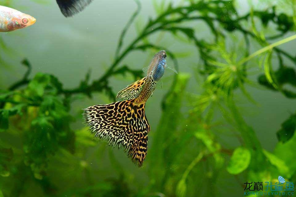 这缸鱼真漂亮