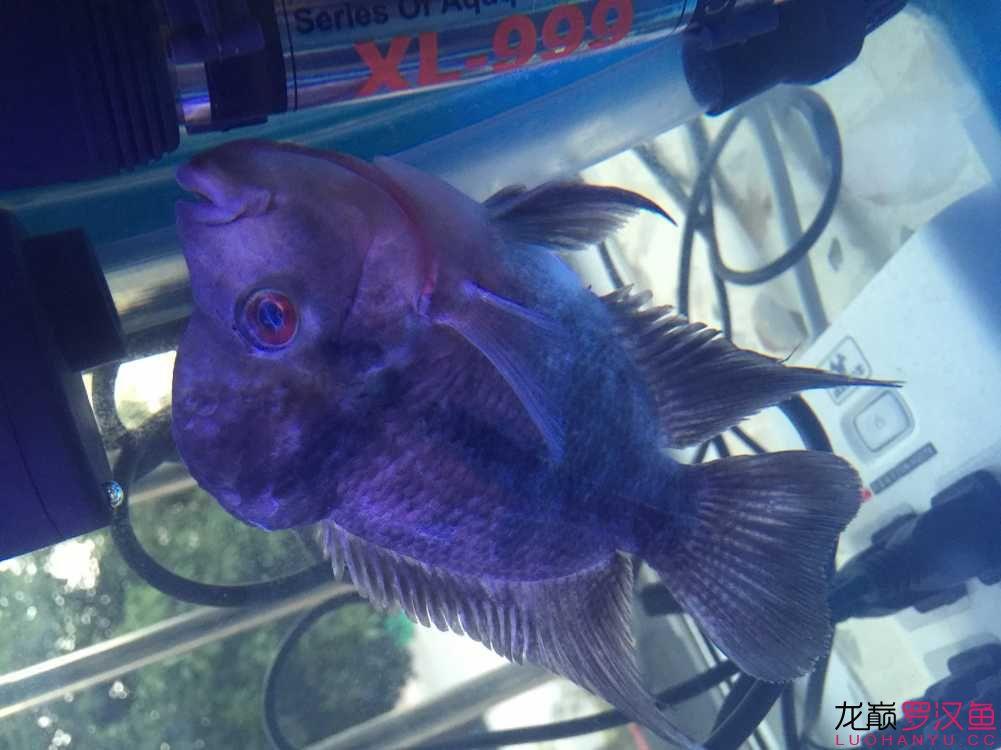 大家救救北京观赏鱼缸定做我的小罗