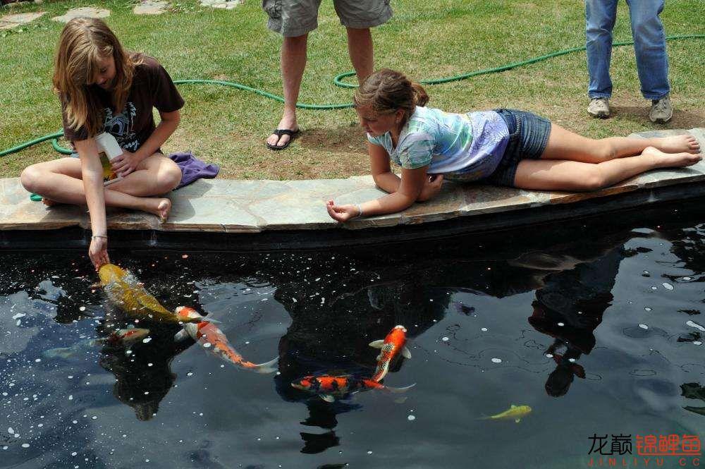 国外小朋友和锦鲤鱼的嬉戏