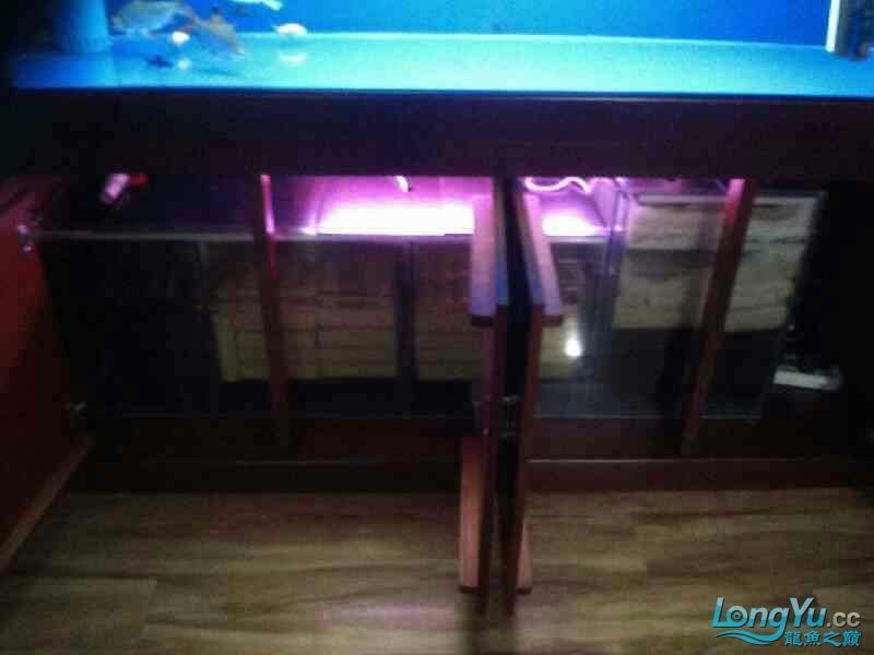 我北京虎鱼有几种的新1.8米鱼缸