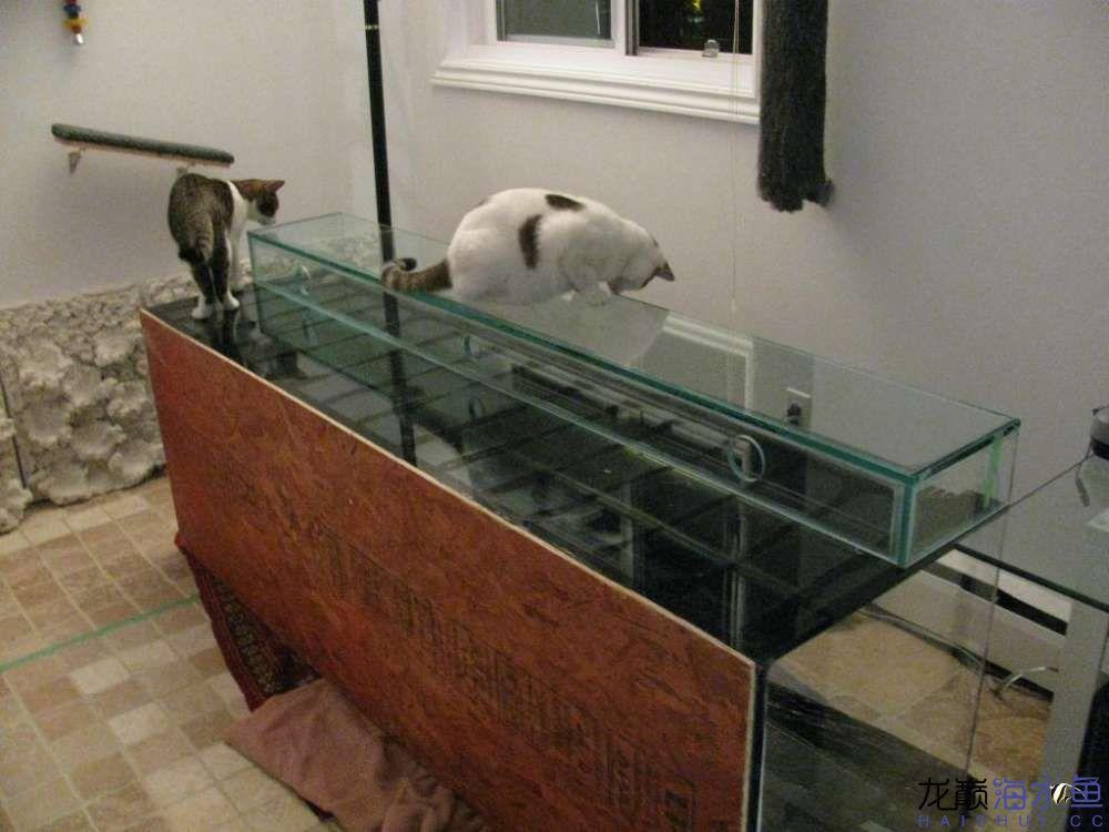北京哪个水族店有斑马鸭嘴中秋快乐!。整理缸。