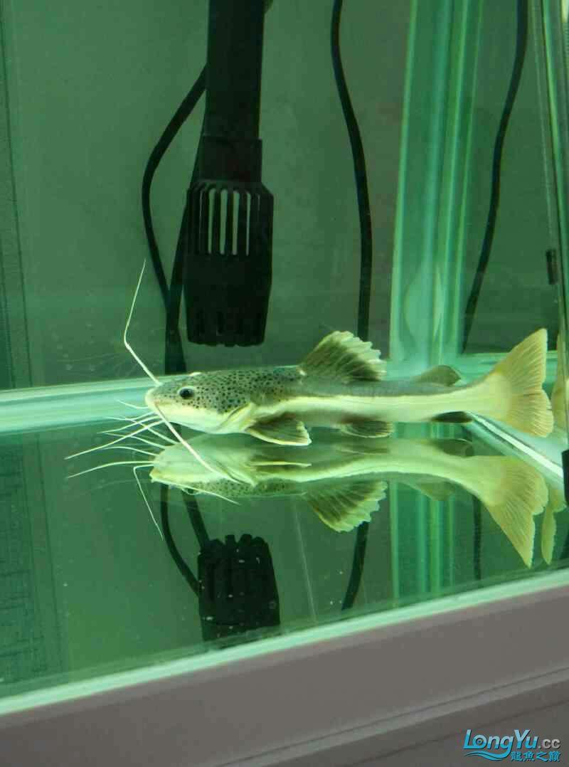 有懂 猫鱼 的吗?帮忙给看看