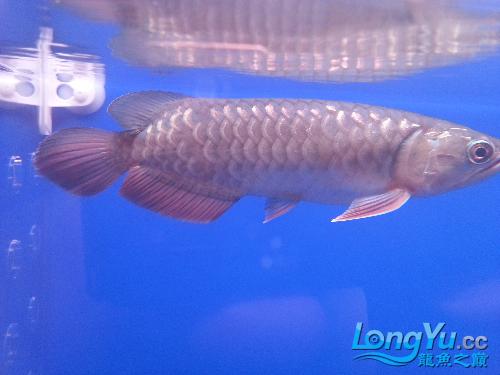 大家帮忙北京1点2米鱼缸价格及图看看是什么品种