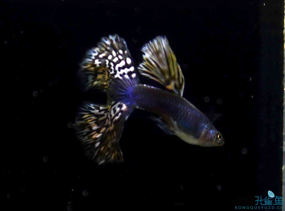 很奇怪的鱼
