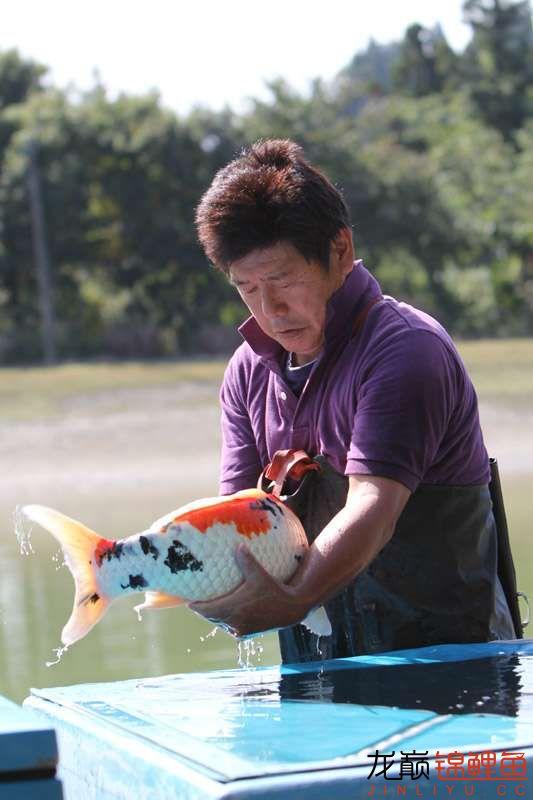 锦鲤丰收,抱鱼动作很专业