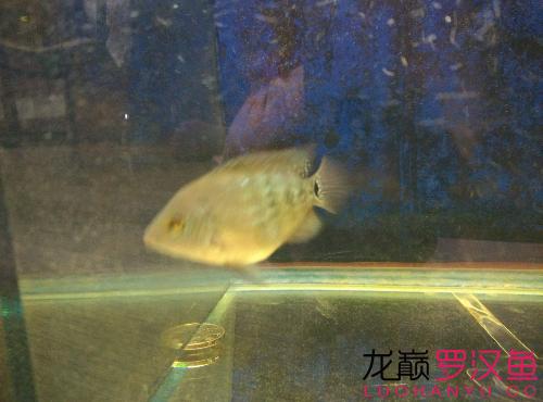 我的幻彩鱼苗养了一个月了