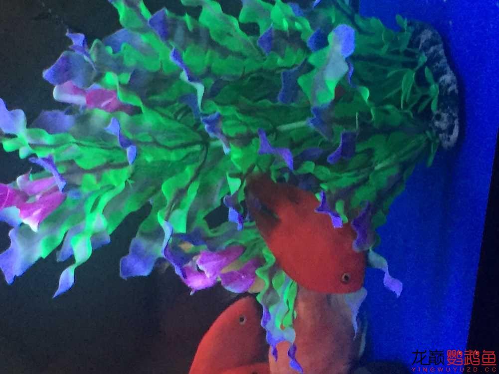 为什么鹦鹉鱼喜欢睡草上,请高手赐教