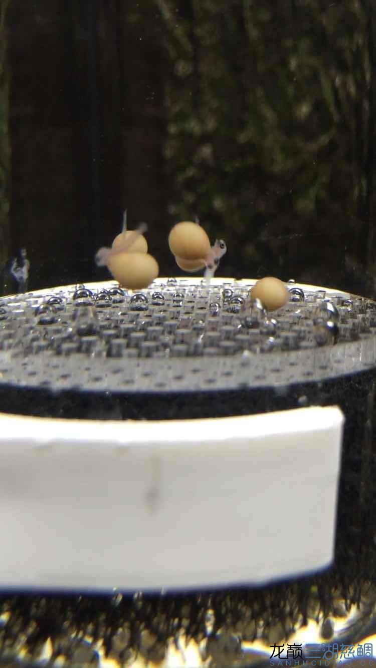 【北京最大的宠物市场】跳湖5个月,第一次扣卵,无比激动!!