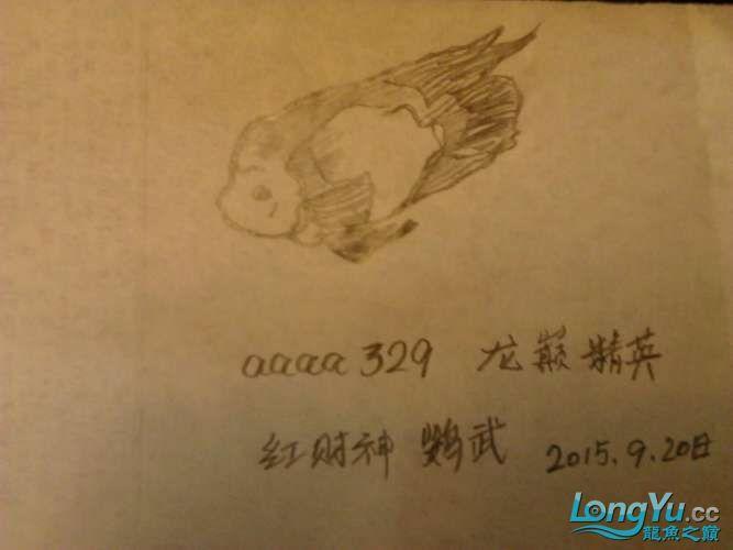 【龙巅精英】红财神鹦鹉