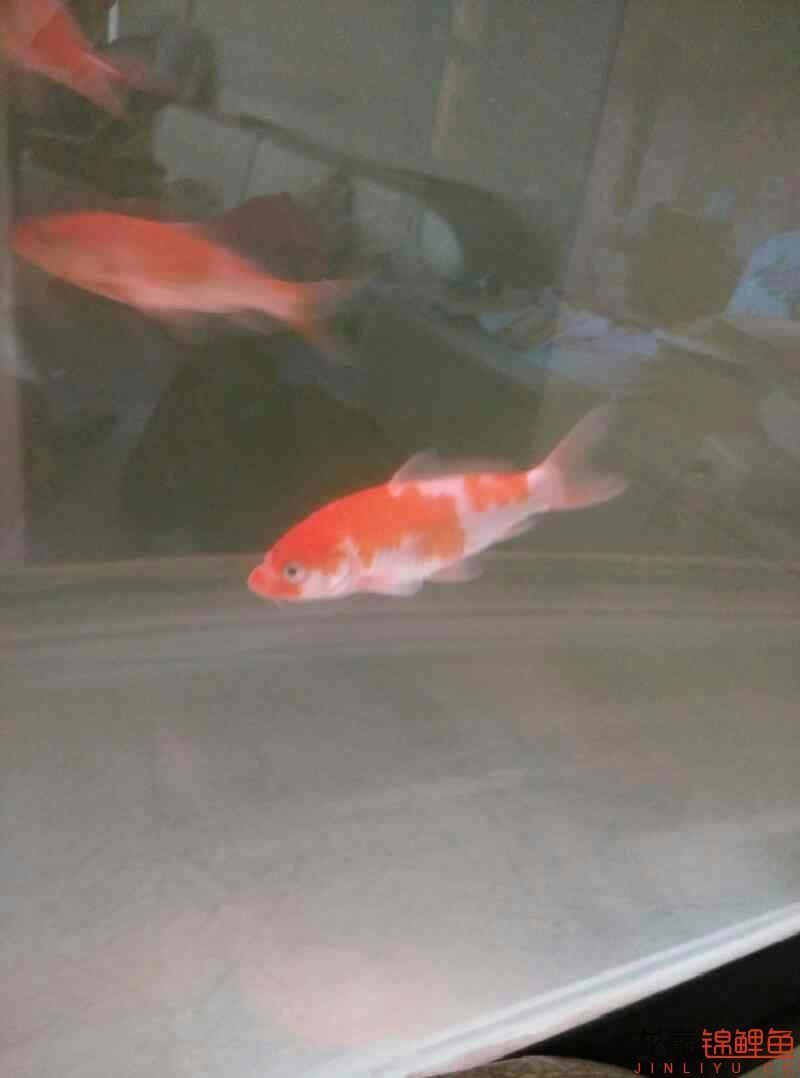 晒晒养了四个月的鱼北京铭友水族