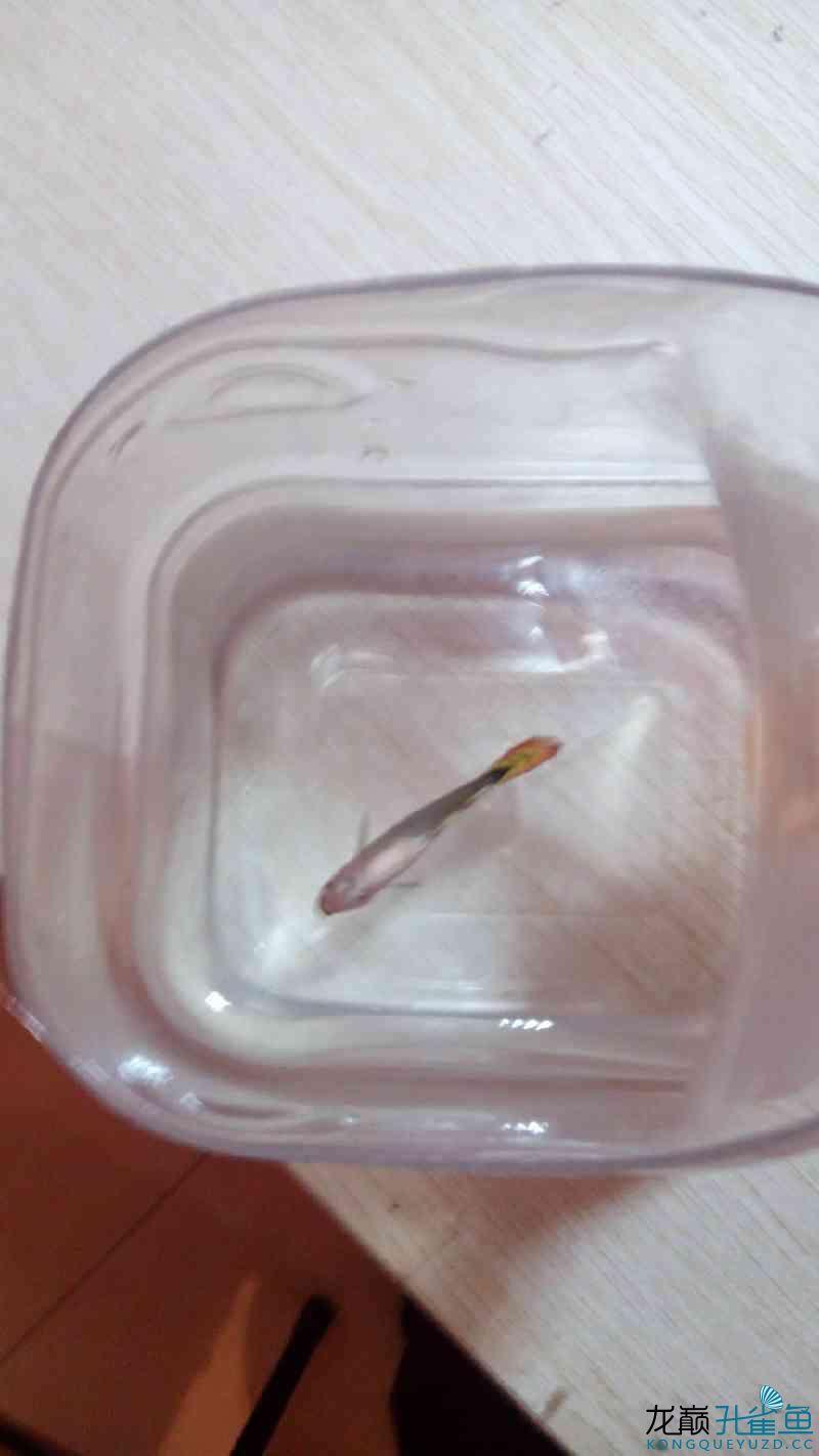 求救小鱼儿这是快挂了吗