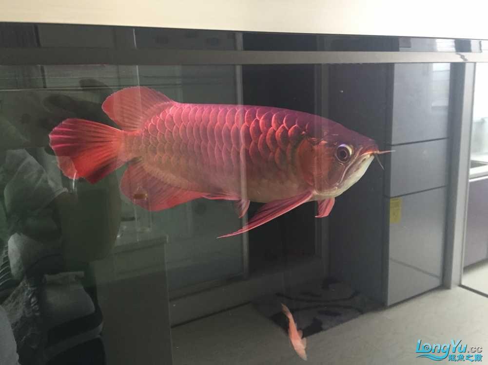 不喜欢鱼的人永北京鱼缸最大的市场远不会懂我们