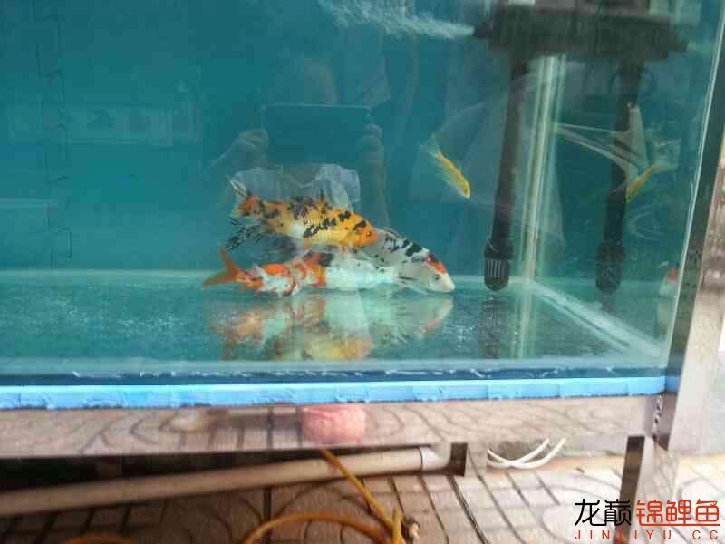新做鱼缸,请各位指点。