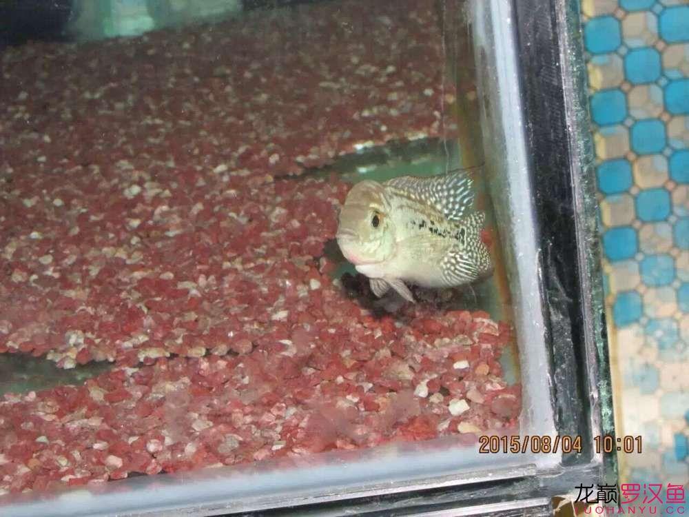 北京买鱼缸最大的市场养了一个月了(泰金)