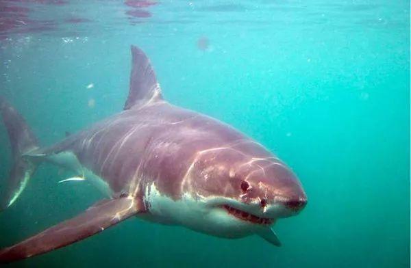 """杀死大白鲨海洋馆""""功不可没"""""""