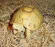 我想养像小金鱼乌龟之类的动物请问在北京哪里可以有买?最好是马驹桥附近
