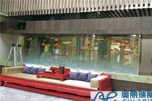 北京哪买虎鱼北京大型亚克力水族工程右安门酒店海鲜池推荐在水一方