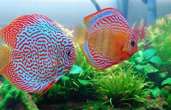 北京动物园海洋馆 都有什么鱼类呢给做些重点介绍吧