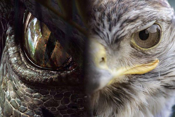 """北京市观赏鱼市场你没看错去鸟市遛""""恐龙""""啦!"""