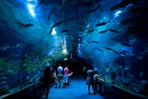 北京海洋馆和天津海昌极地海洋馆这两个地方有什么区别?
