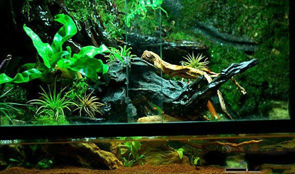 水陆缸一般放哪些植物