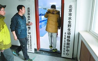 """北京建成首家""""观赏鱼"""" 病鱼可住院治疗"""
