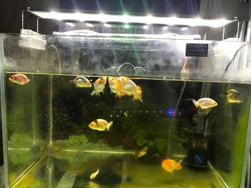 每次吃饱都喜欢在上面吐泡 北京龙鱼论坛 北京龙鱼第1张