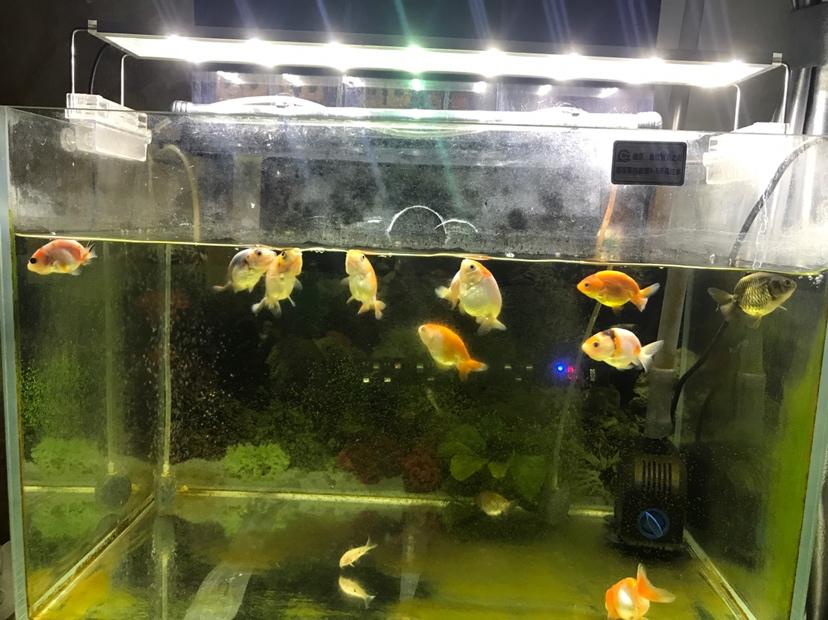 每次吃饱都喜欢在上面吐泡 北京龙鱼论坛 北京龙鱼第2张