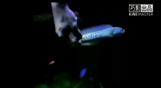 主人说它眼北京市热带鱼批发市场神不好 北京龙鱼论坛 北京龙鱼第1张