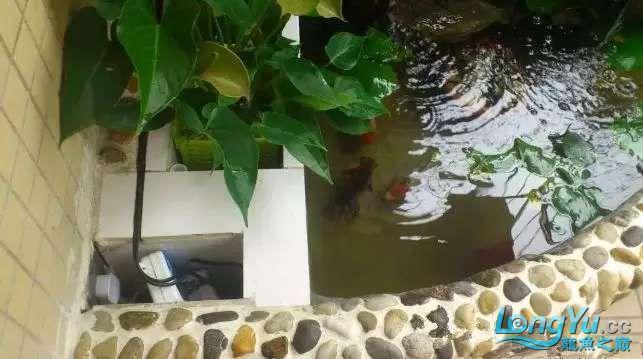 造鱼池再也不需要半亩地和后花园了 北京观赏鱼 北京龙鱼第4张