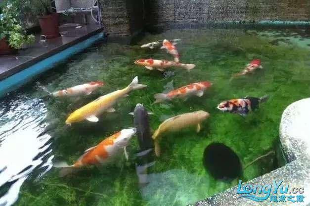 造鱼池再也不需要半亩地和后花园了 北京观赏鱼 北京龙鱼第7张