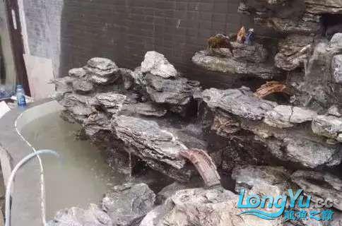 造鱼池再也不需要半亩地和后花园了 北京观赏鱼 北京龙鱼第17张