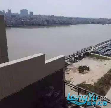 造鱼池再也不需要半亩地和后花园了 北京观赏鱼 北京龙鱼第19张