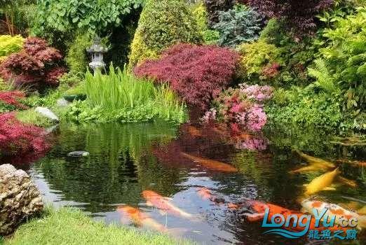 造鱼池再也不需要半亩地和后花园了 北京观赏鱼 北京龙鱼第20张