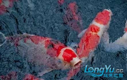 造鱼池再也不需要半亩地和后花园了 北京观赏鱼 北京龙鱼第22张