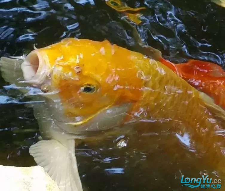 造鱼池再也不需要半亩地和后花园了 北京观赏鱼 北京龙鱼第23张
