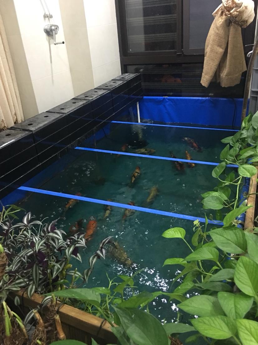鱼病防治重在预防 北京龙鱼论坛 北京龙鱼第2张