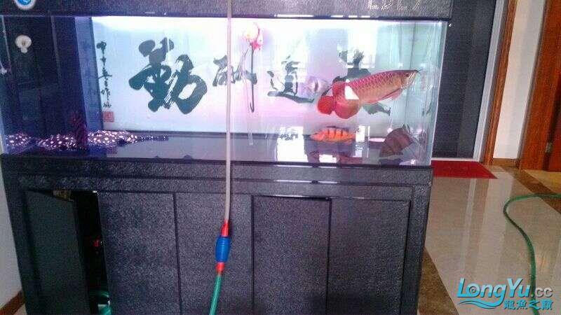 [鱼趣养水机养水说一说]己经2年多的换水方式 北京观赏鱼 北京龙鱼第5张