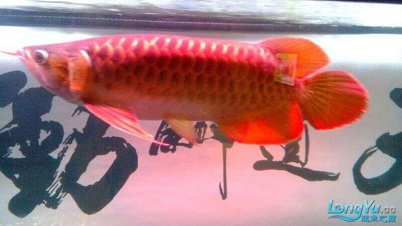 [鱼趣养水机养水说一说]己经2年多的换水方式 北京观赏鱼 北京龙鱼第6张