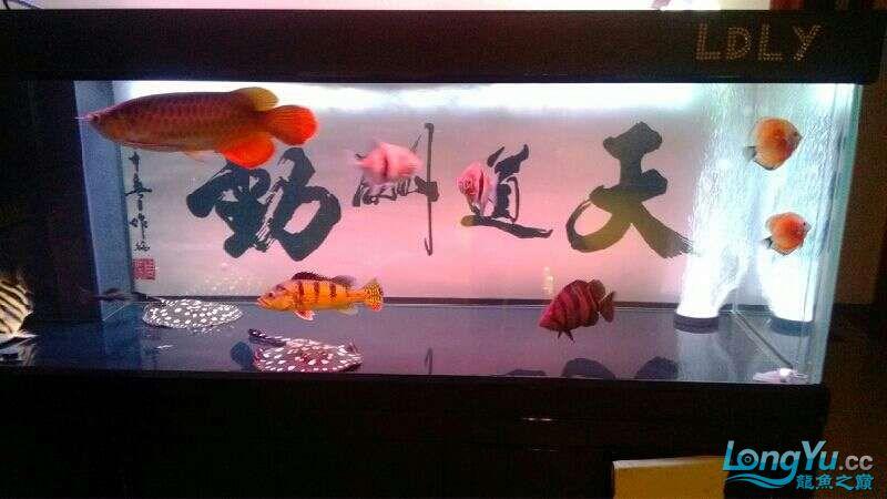 [鱼趣养水机养水说一说]己经2年多的换水方式 北京观赏鱼 北京龙鱼第7张