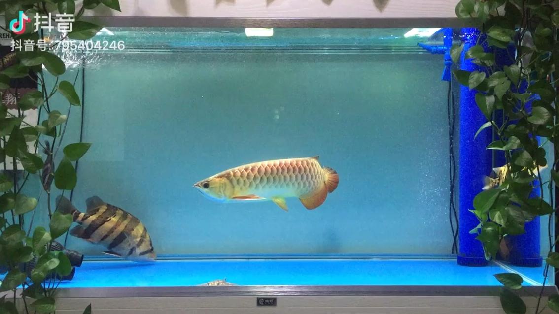 养鱼要有耐心恒心平常心 北京观赏鱼 北京龙鱼第1张