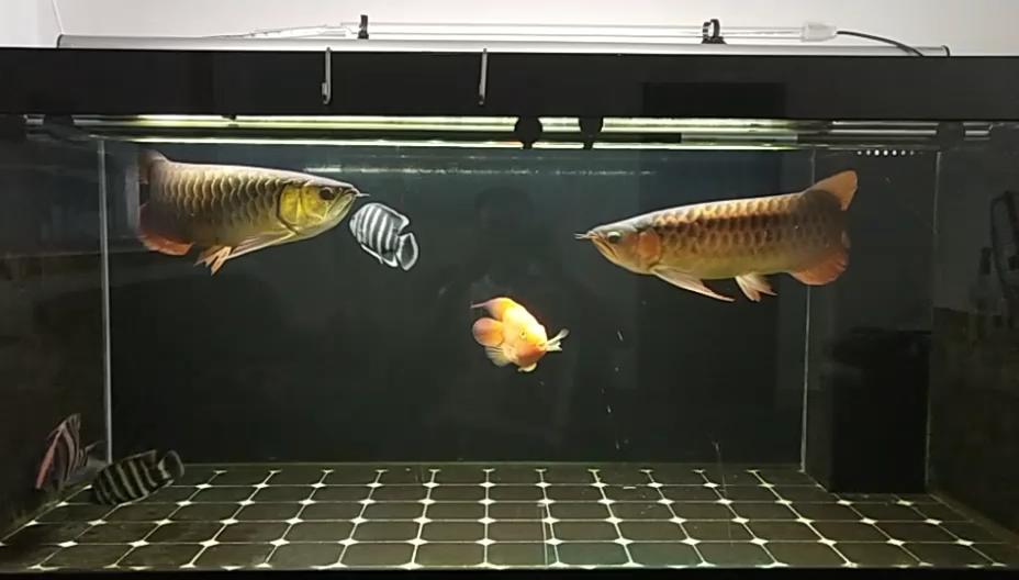 周末办公室赏鱼 北京龙鱼论坛