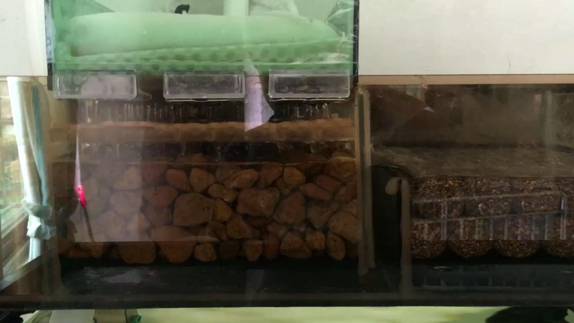生命在于折腾锦鲤 北京龙鱼论坛