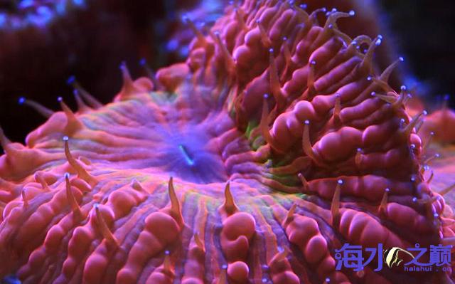 北京水族批发市场甜蜜的情人——珊瑚 北京龙鱼论坛 北京龙鱼第3张