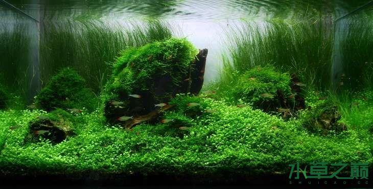 水草缸怎样换水? 北京观赏鱼 北京龙鱼第2张
