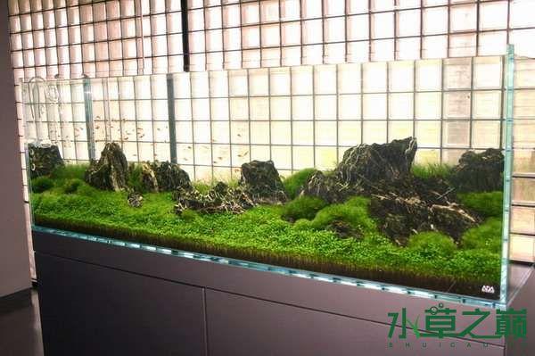 水草缸怎样换水? 北京观赏鱼 北京龙鱼第3张