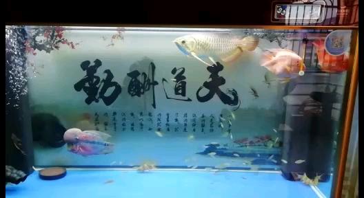 罗汉鱼头洞怎样治疗鱼友指点下谢谢了 北京观赏鱼