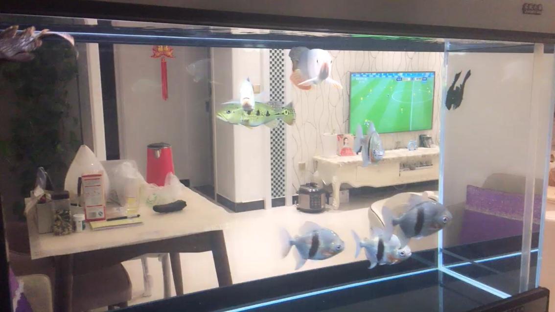 新手龙鱼龙鱼 北京观赏鱼