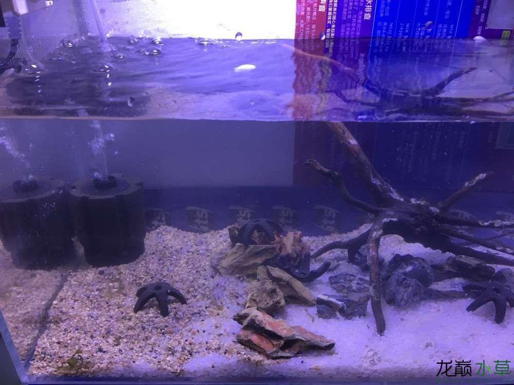 北京龙鱼海绵公司新换了个缸求助 北京龙鱼论坛 北京龙鱼第2张