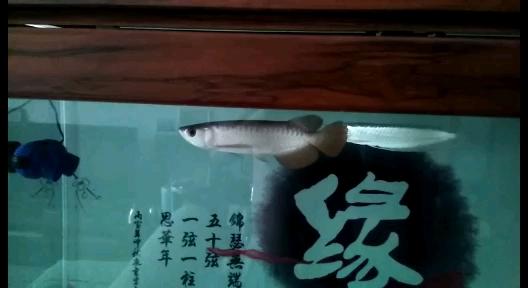 帮忙看下龙鱼 北京龙鱼论坛